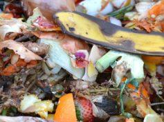 Mentana. Finanziato con 400mila euro l'acquisto di attrezzature di compostaggio dei rifiuti organici