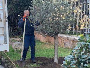 Un ulivo per Micky: cerimonia di intitolazione di una pianta di ulivo per Michela Perai